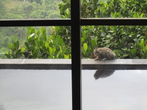 Hanging Gardens Ubud Monkey on Private Infinity Pool